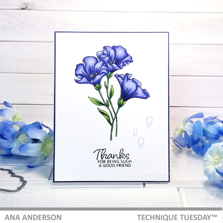 TT-April2019-release-Meadow-Flowers-AnaA1