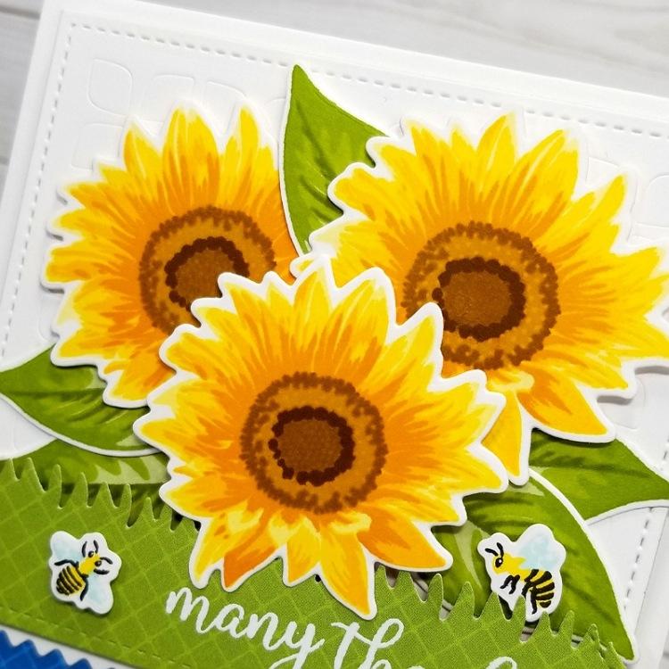 Ana A Sunflower Fields 2c.jpg